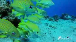 House Reef at Hotel Casa del Mar Cozumel Dive Resort