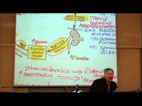 CARDIOVASCULAR DRUGS; ANTI HYPERTENSIVE DRUGS by Professor Fink
