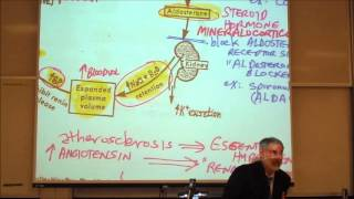 CARDIOVASCULAR DRUGS; ANTI HYPERTENSIVE DRUGS By Professor Fink