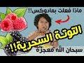 """أطفال يجربون أكل """" التوتة السحرية"""" سبحان الله معجزة إلاهية !! I مترجم ♦ Ep26"""