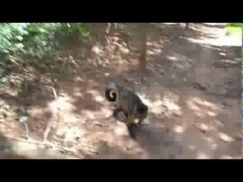 Mata dos Macacos