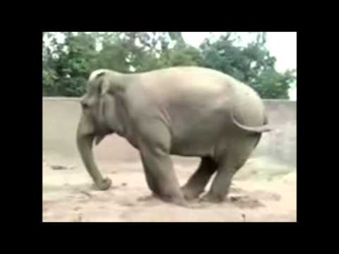 Tembo Shop fun film Lustige Tiere