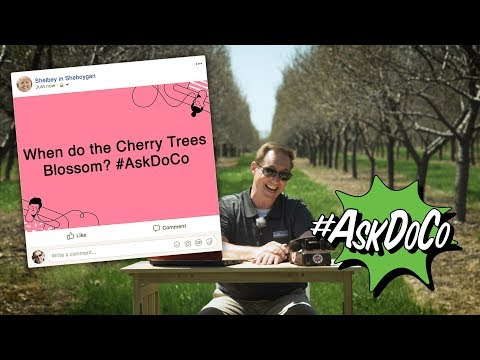 When Do The Cherry Trees Blossom? #AskDoCo
