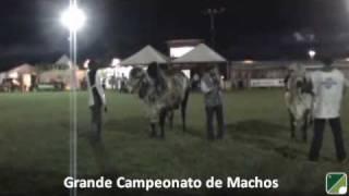 Julgamento Do Gir Leiteiro Na 50ª Exposição Agropecuária De Londrina