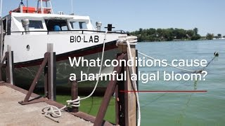 HABs FAQs: What Conditions Cause a Harmful Algal Bloom?