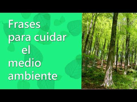 Frases celebres - Frases de ecología , Frases para cuidar el medio ambiente  y naturaleza