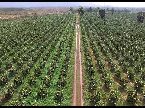 CPTPP: Cơ hội và thách thức cho nông sản Việt Nam