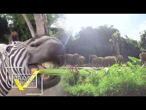 "Serunya Ber""main-main"" bareng Binatang-binatang yang ""Agresif"" di TAMAN SAFARI! | TRAVEL'S CHECKLIST"