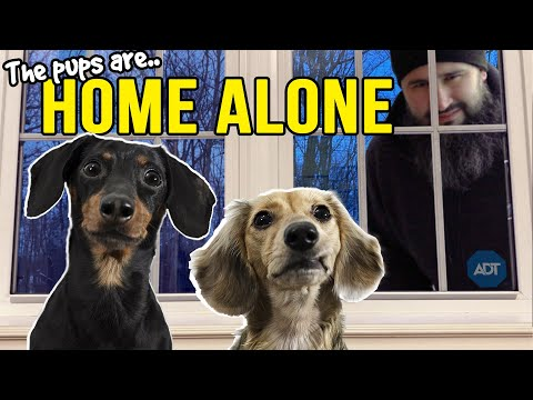 Ep#13: The Dogs are HOME ALONE - then Puppy Burglar Arrives! 😲