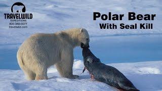 Video Polar Bear with Seal Kill MP3, 3GP, MP4, WEBM, AVI, FLV Agustus 2017