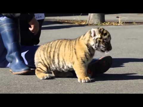 Có ai muốn một con không ?