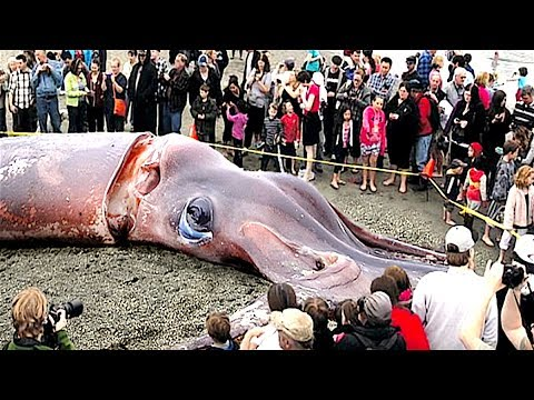 6 mitiche creature trovate nella realtà - vero o falso?