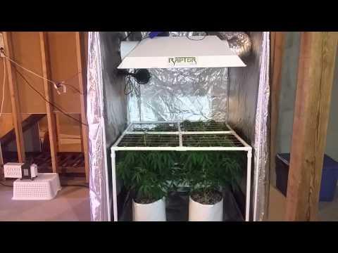 4x4 Grow Tent 600w Hps 4x4 Grow Tents ep 4