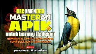 Download Video Tledekan Gunung Gacor Full Tembakan Ngeroll Panjang MP3 3GP MP4