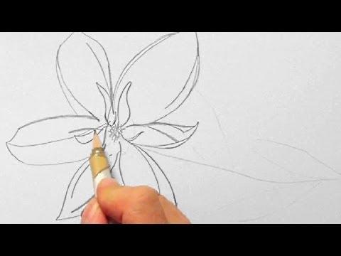 Blume, zeichnen im Zeitraffer 01 (Flower, drawing in fast motion)[HD]