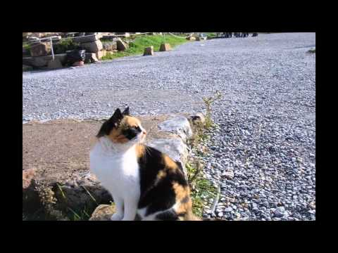 Cat Training Secrets – Learn The Cat Training Secrets The Expert; Cat Health issues