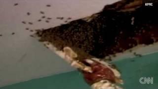 100.000 pszczół w domowym suficie przez 10 lat!