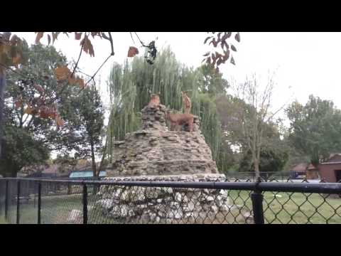 Mountin Goats At Niabi Zoo On October 15, 2016🐏🐐🐑