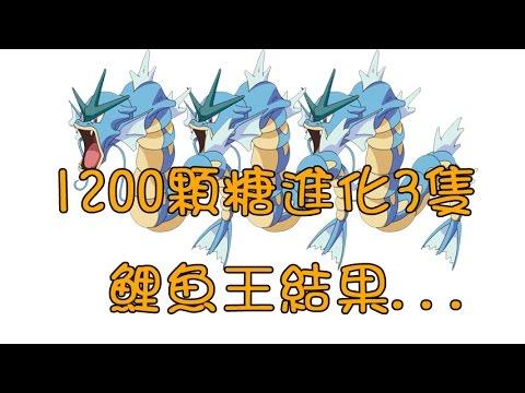 【Pokemon+Go】1200顆鯉魚王糖進化成3隻暴鯉龍...結果...
