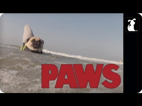 PAWS - The JAWS Parody You Never Knew You Needed, But Definitely Do...