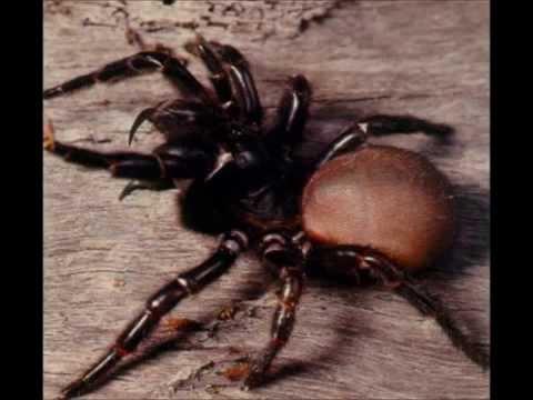 comment traiter araignées rouges