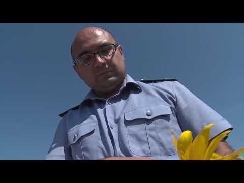 О проведенном обследовании посевов подсолнечника на выявление фомопсиса в Ростовской области