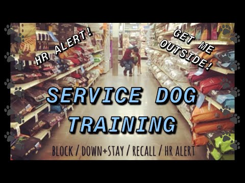 Service Dog On Duty | CanadianServiceHank |