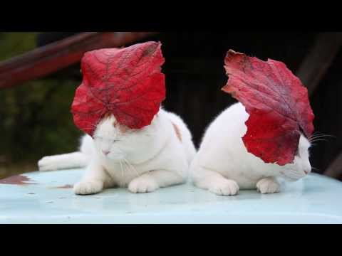 Japanese Cats Wearing Leaf Hats
