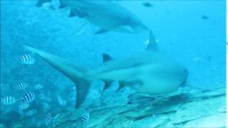 FIJI SHARK DIVE 20161105 BY SPAD.