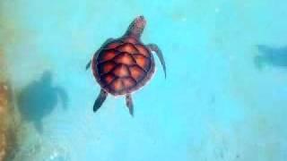 Gemia Island Malaysia  city images : Turtle Island Pulau Gemia Terengganu Malaysia