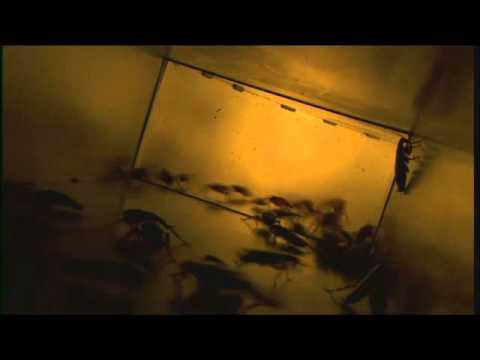 3D Pestcontrol 2014 - Cucarachas periplanetas corriendo por los conductos del aire acondicionado.