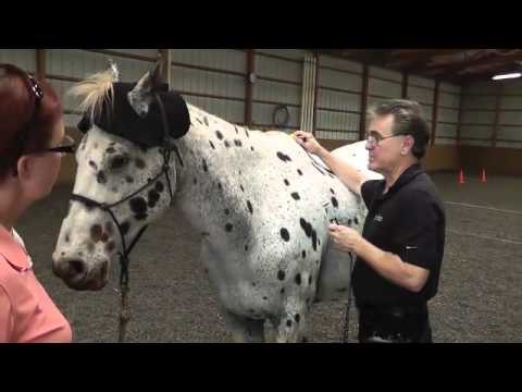 Equine Light Therapy - Scanning Your Horse