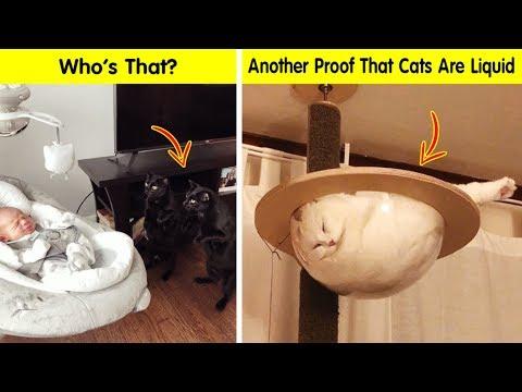 Funny pics - Cats Cracked Us Up - Funny cat pics