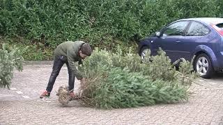 Kinderen verdienen geld met het inzamelen van kerstbomen