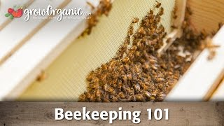 Beekeeping for Beginners—Hive Set Up
