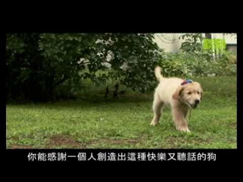 狗狗101--黃金獵犬,讓你更了解狗狗黃金獵犬