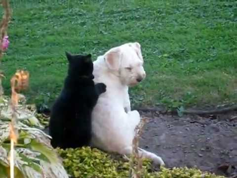 Cat massaging a dog