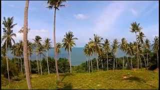 Koh Sriboya (Krabi) Thailand  City new picture : Coconut plantation on Koh Siboya Island, Krabi, Thailand