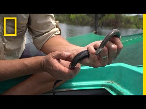 Why Snakes Are Disappearing From Southeast Asia's Largest Lake | National Geographic