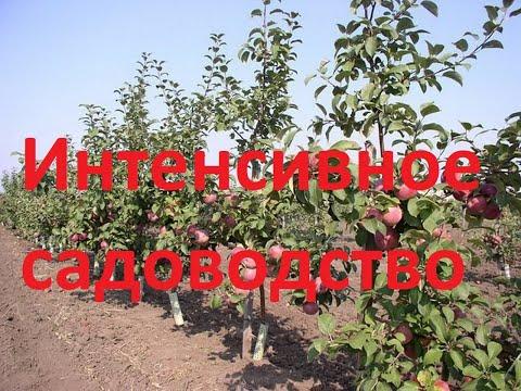 Саженцы яблони на осень 2020г