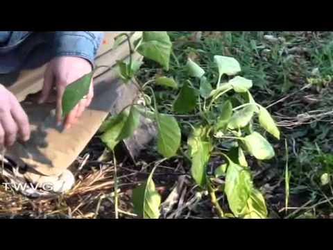 The Wisconsin Vegetable Gardener Show 1