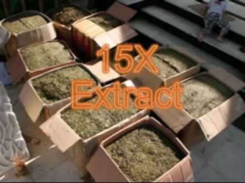 Kratom Extract – The Whole Truth