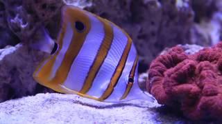 Download Lagu 500 liters reef aquarium day 50 Mp3