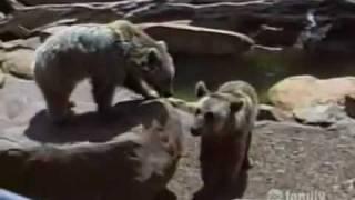 America's Funniest Home Videos - Nhung Clip hai hay nhat - tap 86