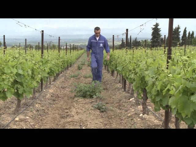 Irrigation des vignes du Pays d'Ensérune