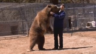 Video 5 Shocking Bear Attacks Caught on Video MP3, 3GP, MP4, WEBM, AVI, FLV November 2018