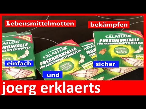 Lebensmittelmotten sicher bekämpfen Lifehack  Vol.80