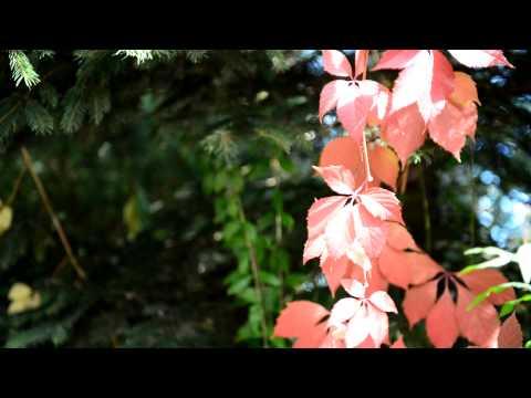 Nikon D600 - sample movie #2