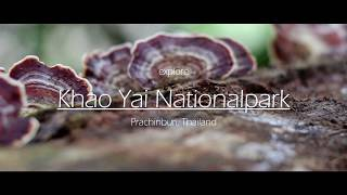 In Juli 2017 I visited beatiful Khao Yai Nationalpark in Thailand. If you're thinking about going there these impressions might help ...