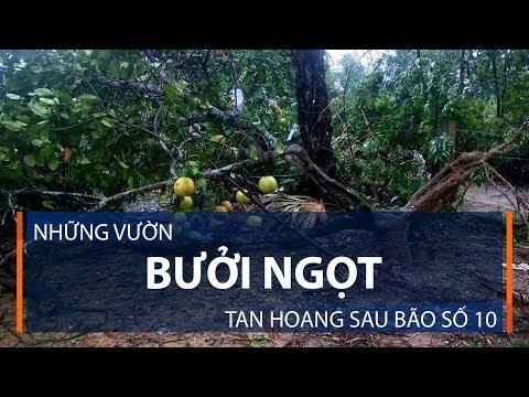 Những vườn bưởi ngọt tan hoang sau bão số 10 | VTC1 - Thời lượng: 2 phút, 28 giây.